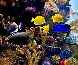 Das New York Aquarium auf Coney Island